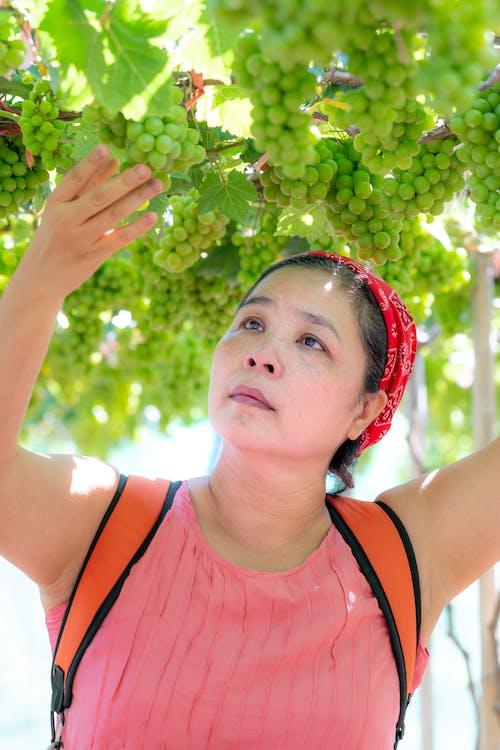 Безкоштовне стокове фото на тему «Бандана, виноград, глибина різкості, головний убір»