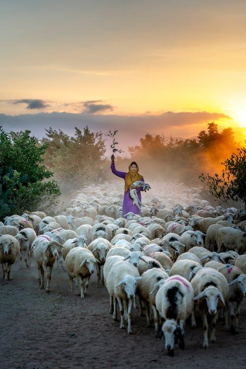 Δωρεάν στοκ φωτογραφιών με αγρόκτημα, αγροτικός, Ανατολή ηλίου, αυγή