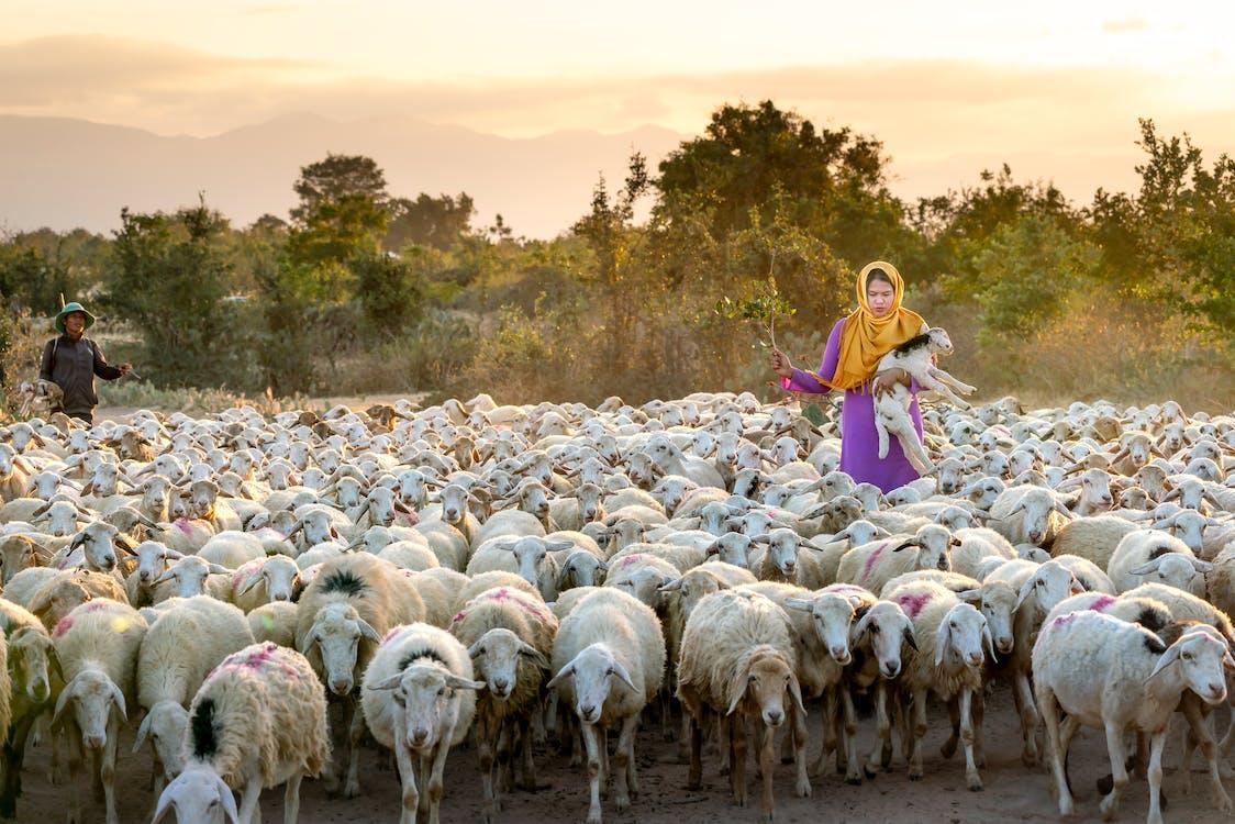 Foto Der Frau, Die Lamm Hält