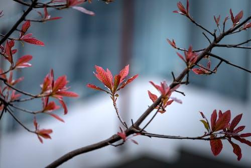 Ingyenes stockfotó ág, finom, gyönyörű virágok, mélységélesség témában