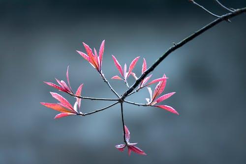 Gratis stockfoto met bloeiend, bloemen, delicaat, depth of field