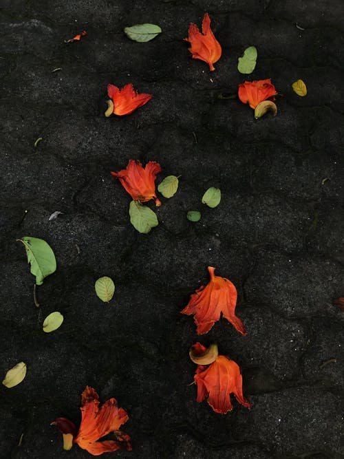 Orange and Green Leaves on Concrete Pavement
