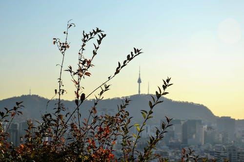 Fotos de stock gratuitas de capital, Seúl