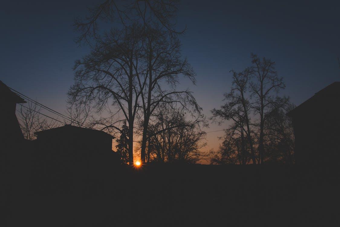 ánh sáng, bầu trời, bình minh