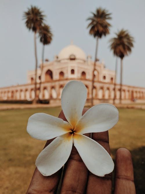 Gratis arkivbilde med arkitektur, blomster, historisk, Kulturarv