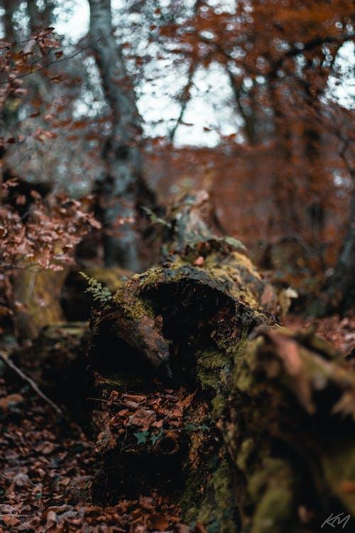 Gratis lagerfoto af blad, blade, efterår, efterårsblade