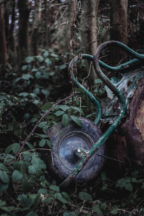 スコットランド, 木, 森林の無料の写真素材