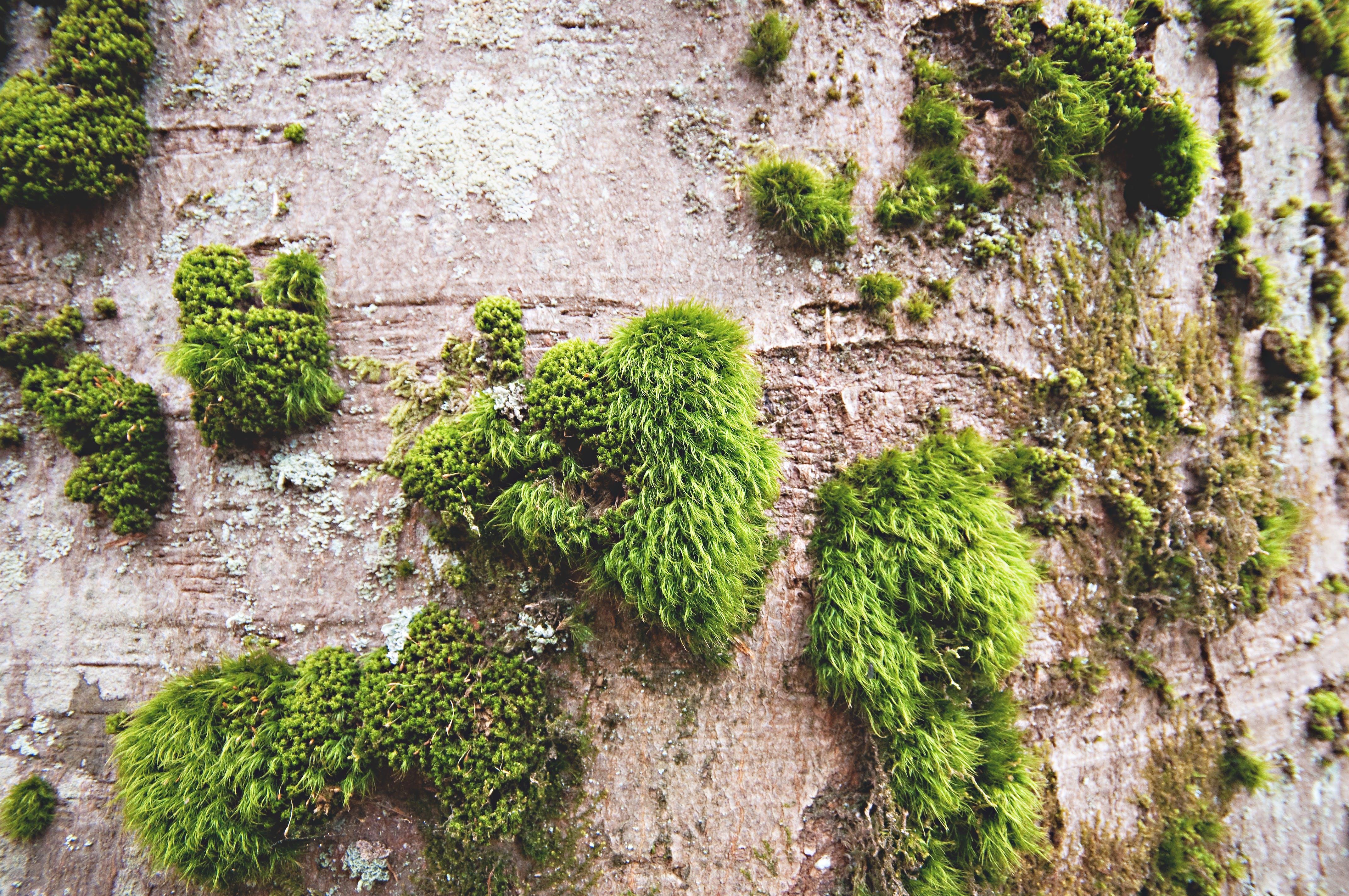 Free stock photo of wood, summer, garden, moss