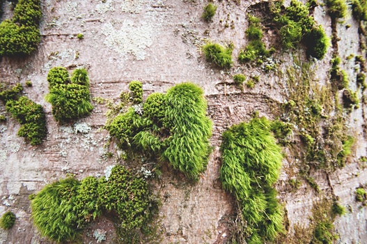 Free stock photo of wood, summer, garden, moss