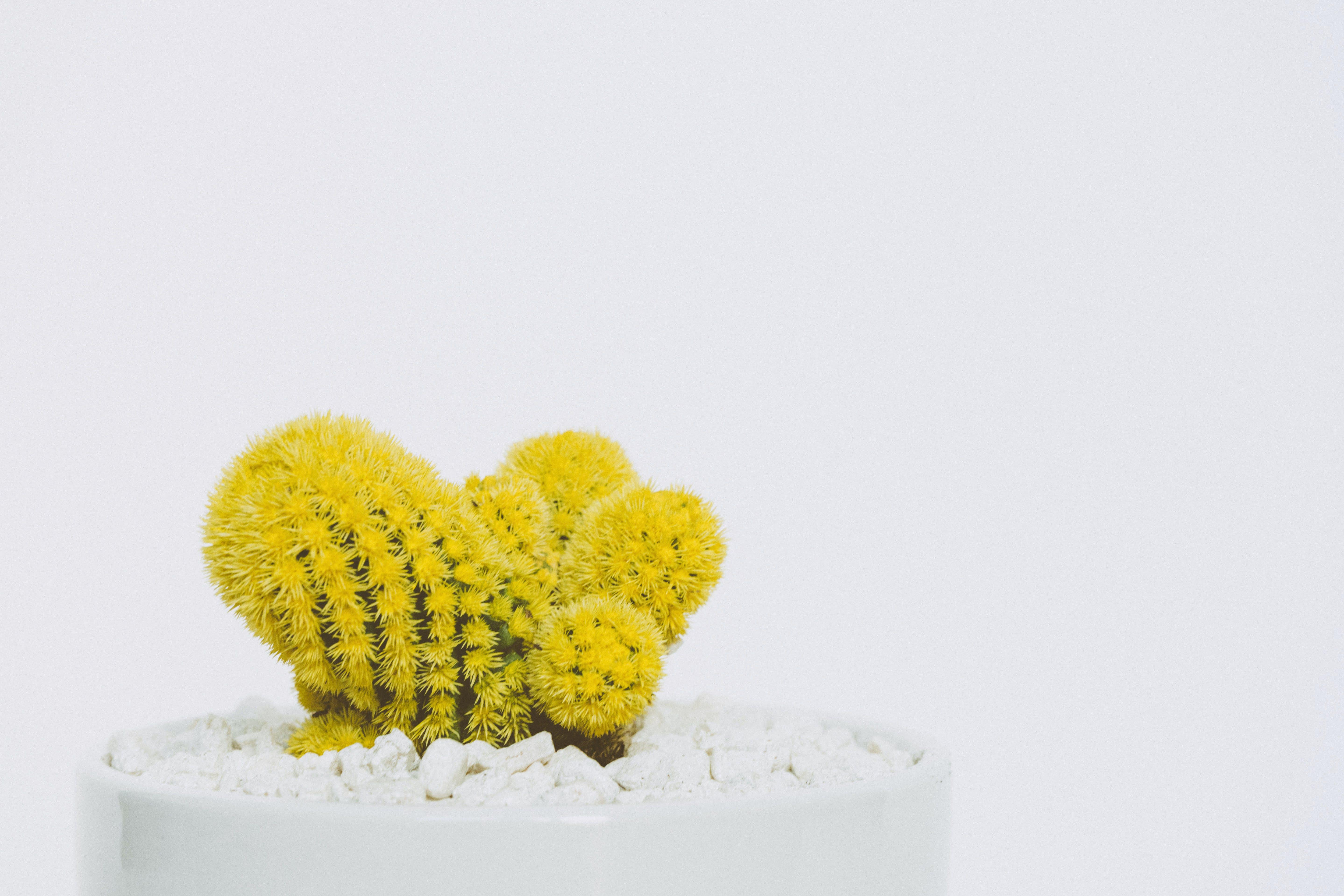 Green Cactus Plant in Pot