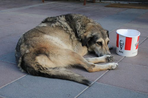 Free stock photo of dog, fast food, food, homelessness
