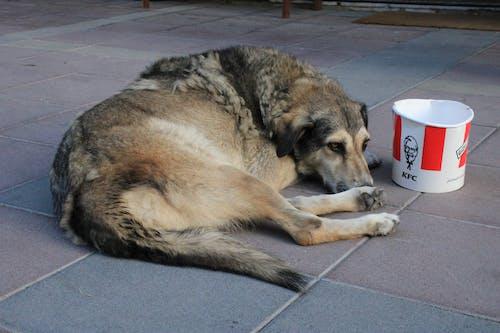 Základová fotografie zdarma na téma bezdomovectví, jídlo, pes, rychlé občerstvení