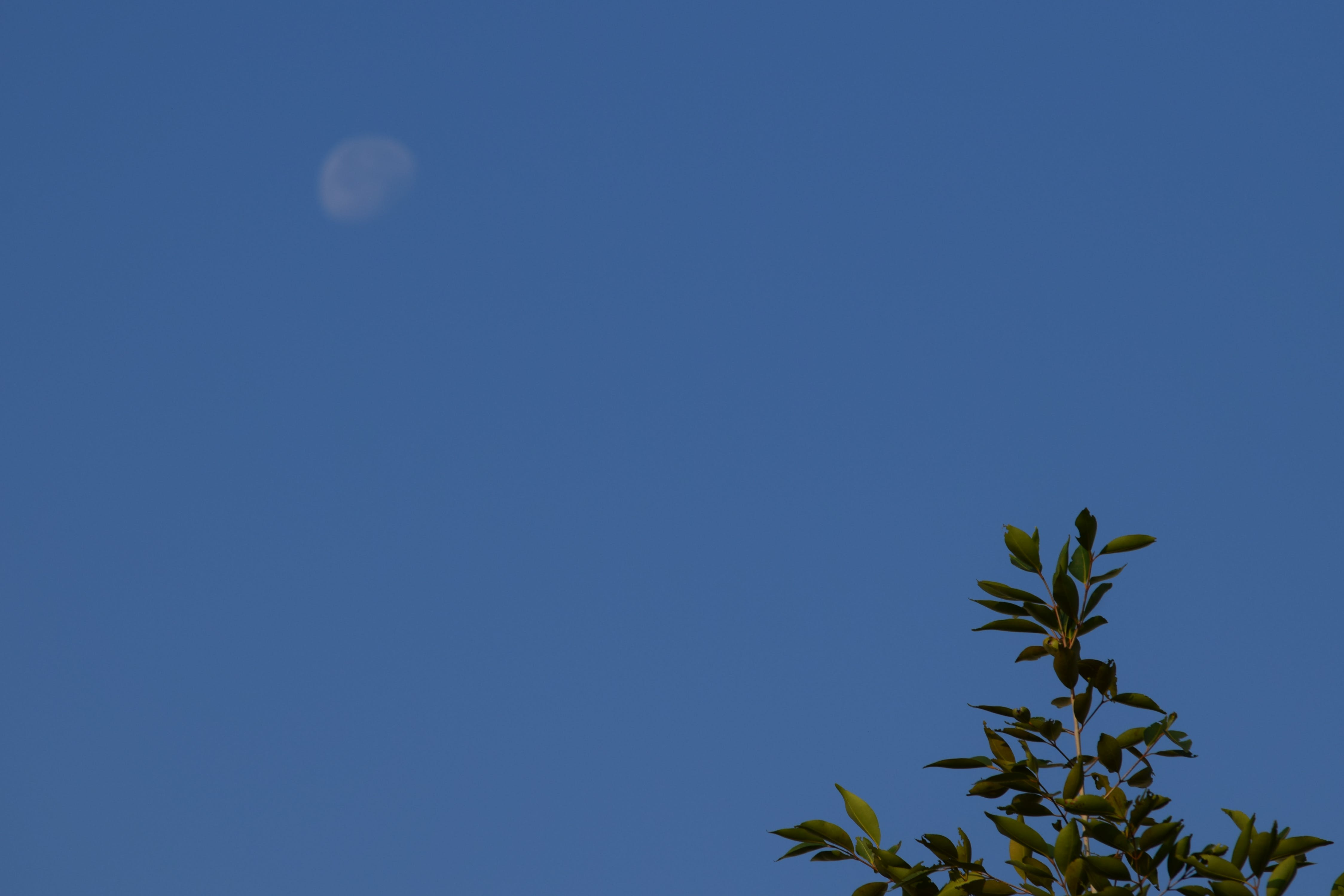 Free stock photo of half-moon, moon