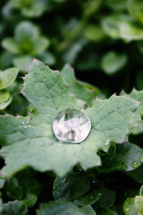 Free stock photo of beauty of nature, close up, dewdrop, green leaf
