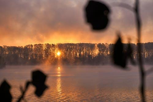 Photos gratuites de ambiance, arbres, atmosphère