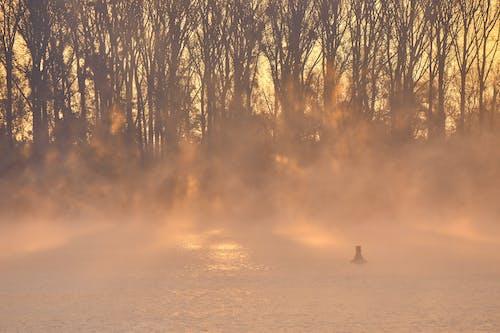 Kostenloses Stock Foto zu atmosphäre, bäume, feuer