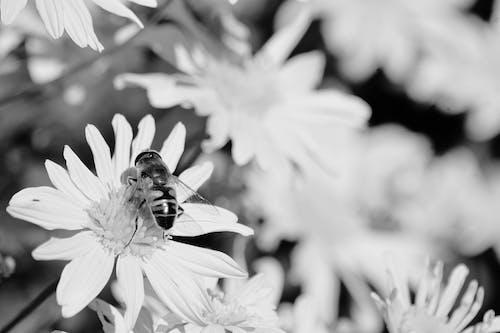 Photos gratuites de abeille, bourdon, brillant, brouiller