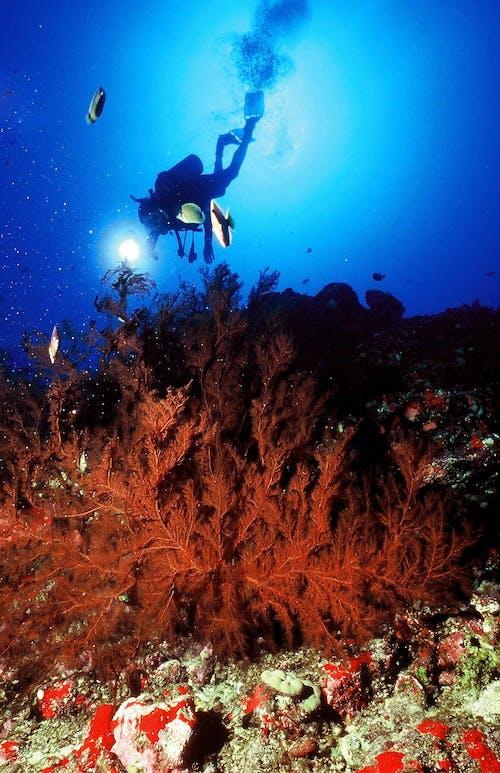 Free stock photo of underwater