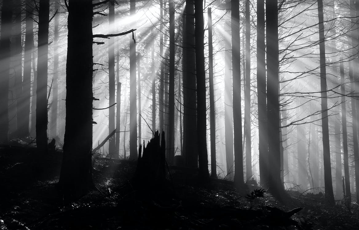 arbres, bois, brouillard