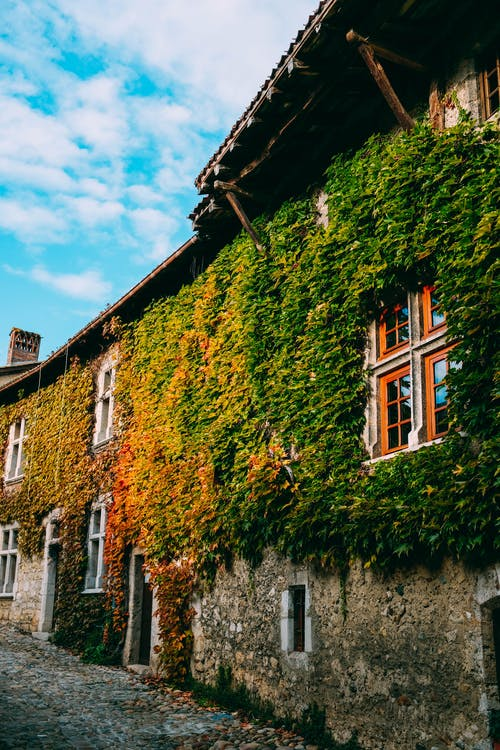 Houses With Vines on the Wall