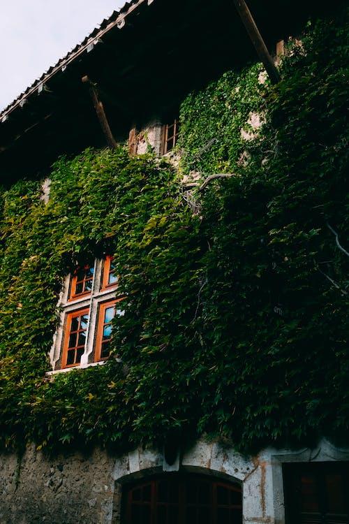 Δωρεάν στοκ φωτογραφιών με αρχιτεκτονική, κισσός, κτήριο, οικία