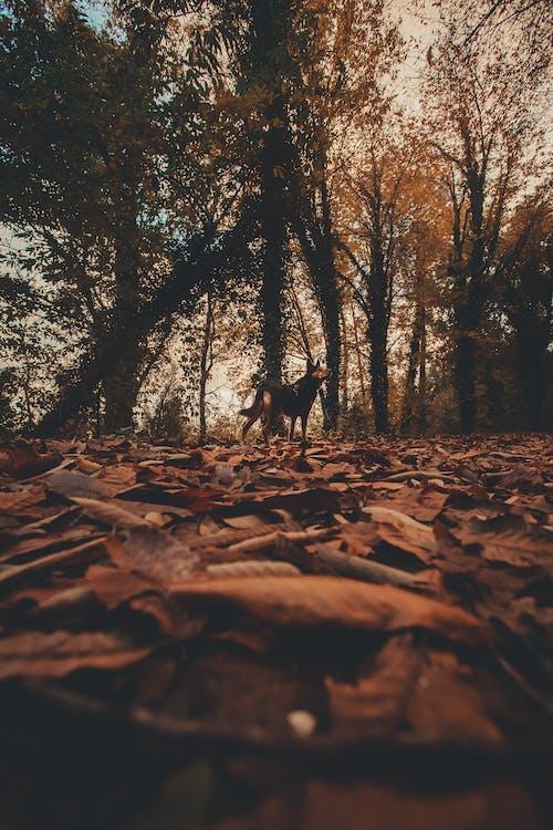 Immagine gratuita di foglie, foglie secche, profondità di campo, stagione