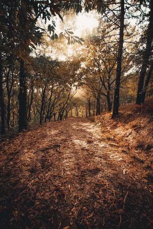 alberi, all'aperto, ambiente