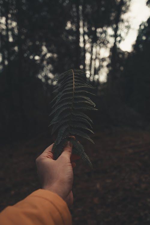 Immagine gratuita di foglie, impianto, macro, mano