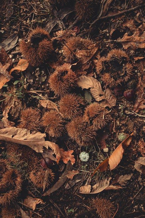 çekilmiş, kuru yapraklar, yapraklar içeren Ücretsiz stok fotoğraf