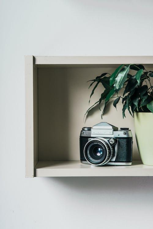 Fotos de stock gratuitas de cámara, cámara analógica, clásico, estantería