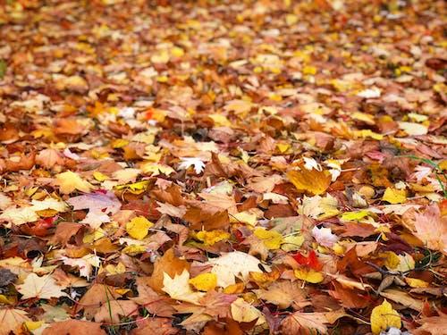 Gratis lagerfoto af efterår, efterår farve, efterårsfarver, naturfotografering