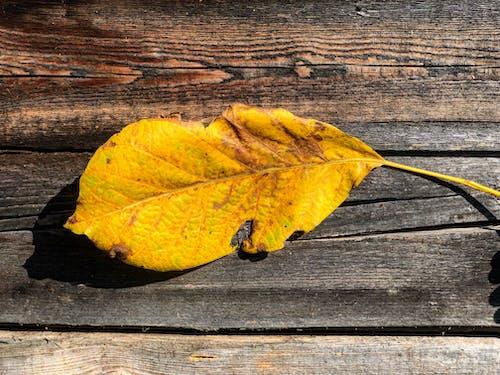 Gratis lagerfoto af efterår, efterår farve, efterårsfarver, farve