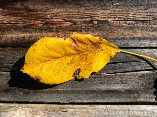 Free stock photo of autumn, autumn color, autumn colors, color