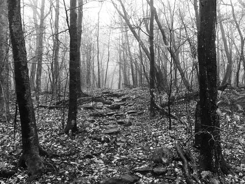 Free stock photo of fog, hiking, monochrome, mountain