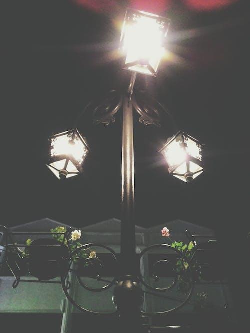 คลังภาพถ่ายฟรี ของ กลางคืน, ช่อดอกไม้, ดอกกุหลาบ, โคมไฟ