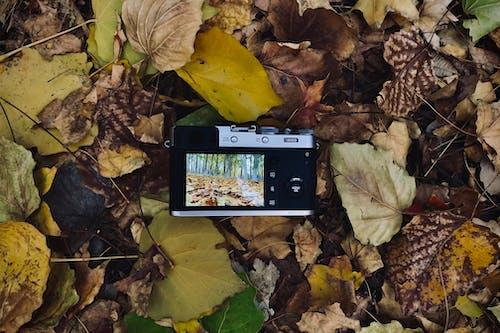Foto d'estoc gratuïta de a l'aire lliure, bosc, càmera, caure