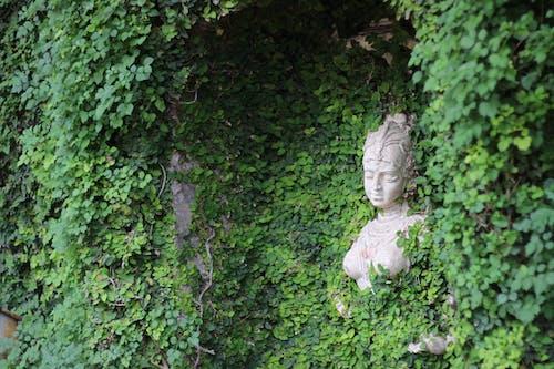 Darmowe zdjęcie z galerii z dama, groch, outdoorchallenge
