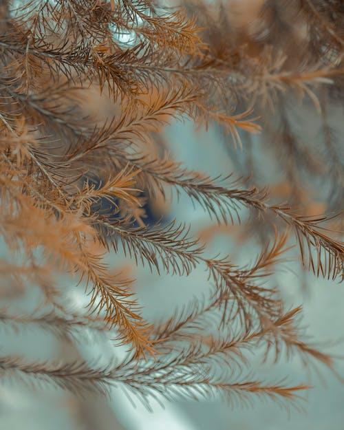 Immagine gratuita di estate, foglie
