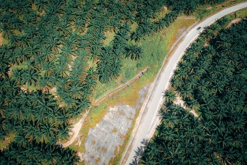 Aerial Photography of Road Surrounded by Trees