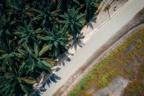 ヤシの木, 上から, 木, 空中ショットの無料の写真素材