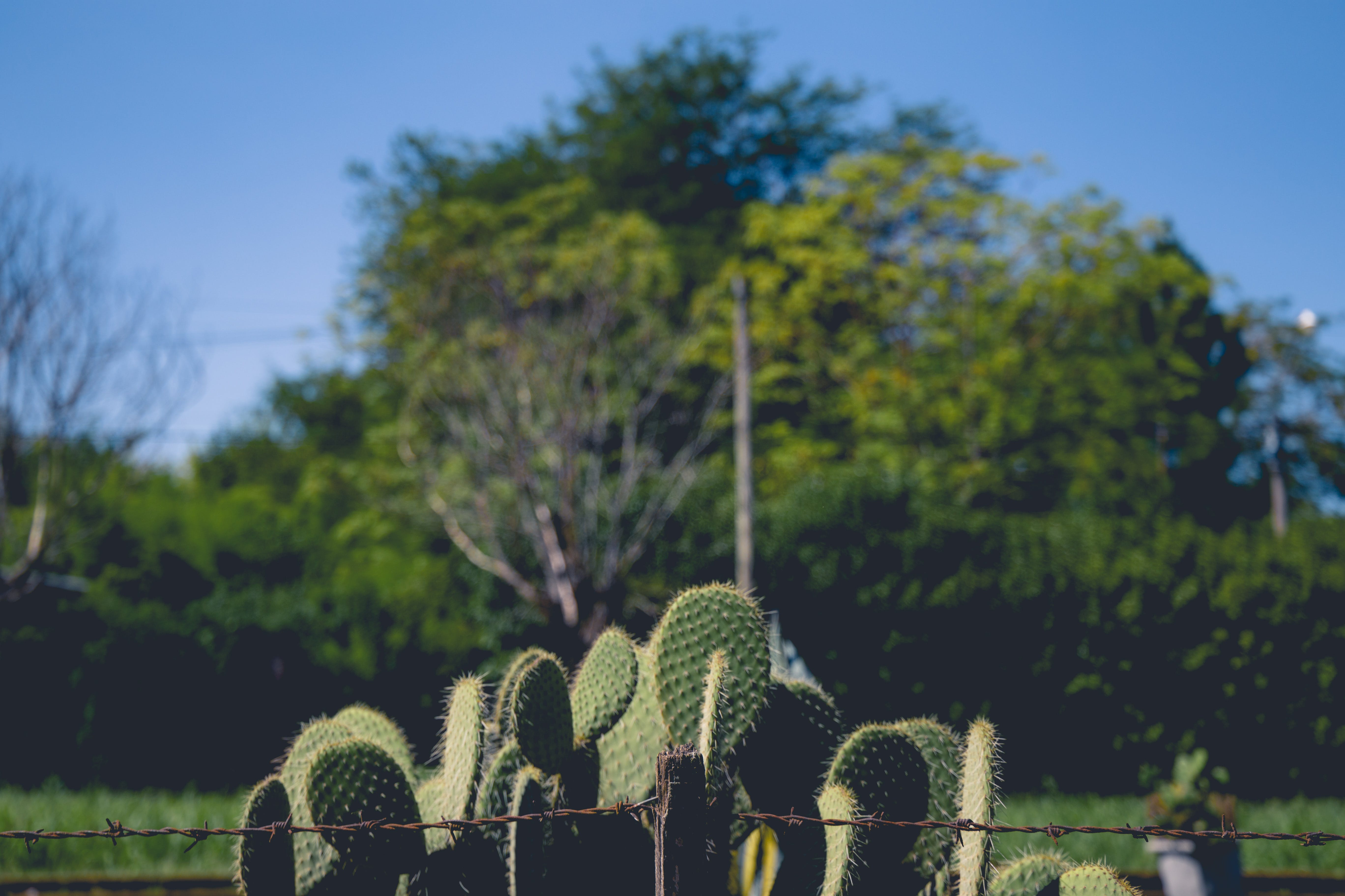 Free stock photo of cactus, cactus garden, cactus plant, green