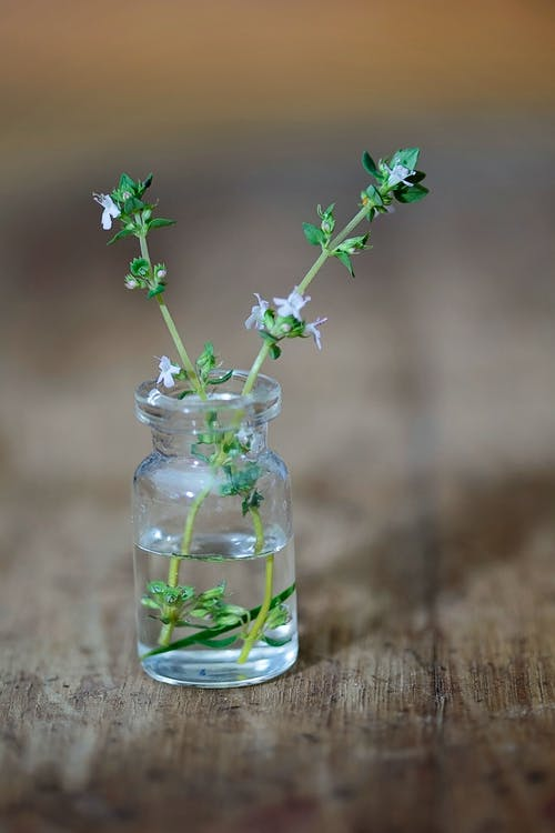 Immagine gratuita di erba, erbe aromatiche, impianto