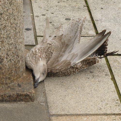 Darmowe zdjęcie z galerii z dalles, faune, mort, oiseau