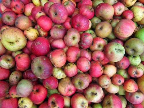 Бесплатное стоковое фото с зеленое яблоко, красное яблоко, фрукты, яблоки