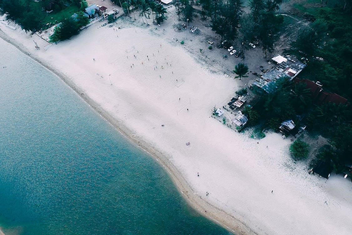 areia, árvores, beira-mar