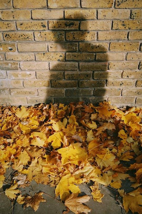 Základová fotografie zdarma na téma cihlová zeď, cihly, listy, padání