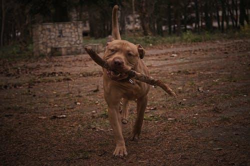 Бесплатное стоковое фото с собака