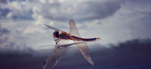 Immagine gratuita di addormentato, bellezza nella natura, disteso, dragon fly