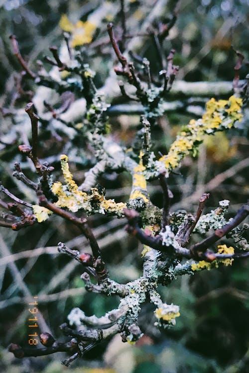 Бесплатное стоковое фото с ветвь, дерево, заводы