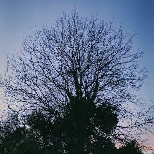 Бесплатное стоковое фото с seunset, дерево, природа
